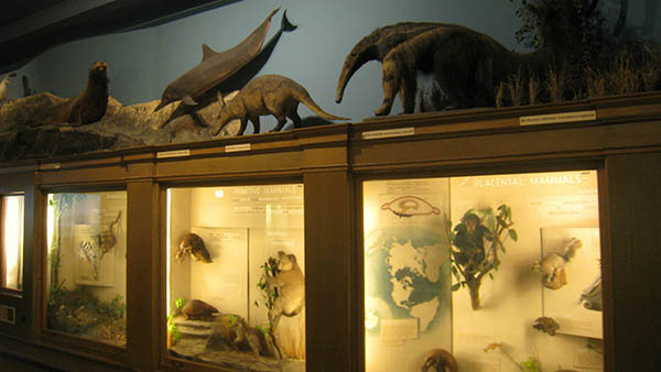 charter bus buffalo new york attractions buffalo museum of science
