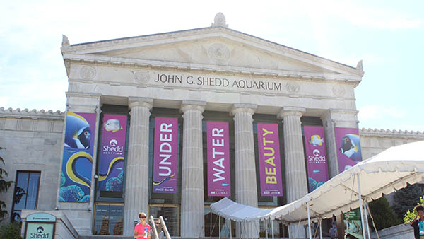 charter bus chicago attractions shedd aquarium