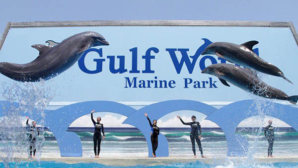 charter bus panama city beach florida attractions gulf world marine park